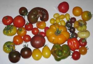Tomatenkollektion